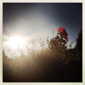 flowersflare