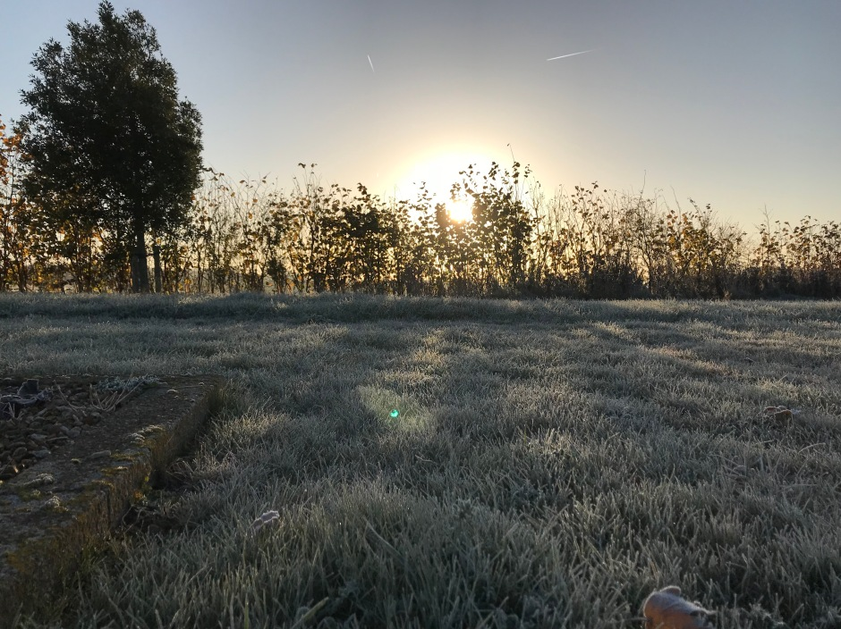 frosty grass with sunrise behind a hedge